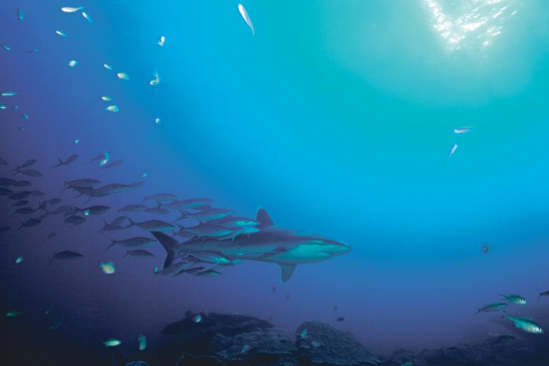 'We onderschatten de rol van onze oceanen'