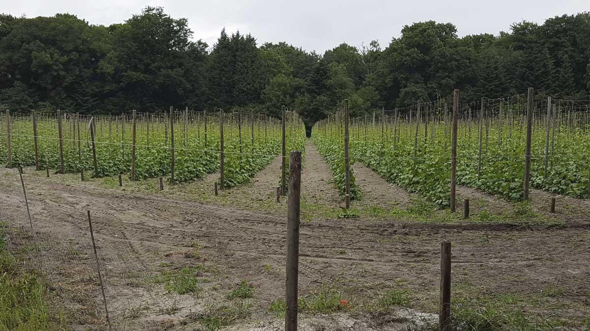 Biodynamische impuls op Brabants landgoed Baest
