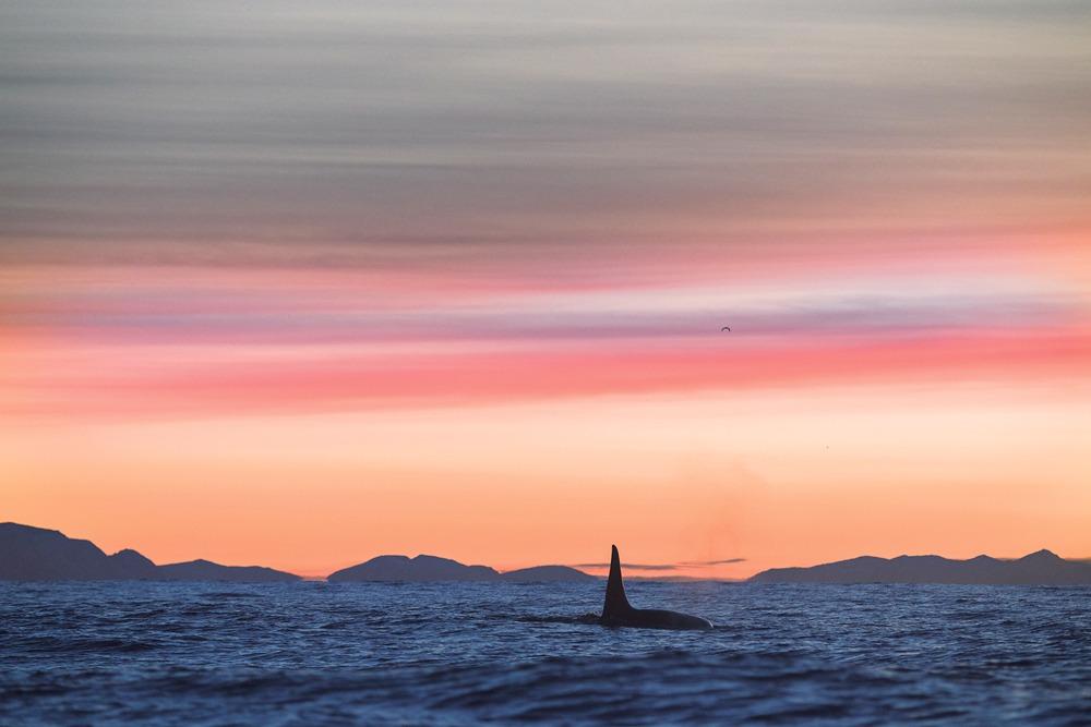 Expeditie Noorwegen, mee met de orka's op haringjacht